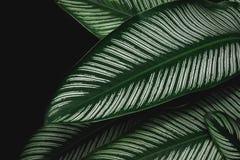 Groene de aard donkergroene achtergrond van het bladpatroon Stock Afbeelding