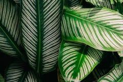 Groene de aard donkergroene achtergrond van het bladpatroon Stock Foto's