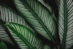 Groene de aard donkergroene achtergrond van het bladpatroon Royalty-vrije Stock Afbeelding