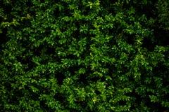Groene de aardachtergrond van de bladeren hoogste mening stock foto's