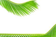 Groene de bladerentextuur van de palmkokospalm op witte achtergrond met de ruimte van het tekstexemplaar stock foto