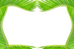 Groene de bladerentextuur van de palmkokospalm op witte achtergrond met de ruimte van het tekstexemplaar stock afbeelding