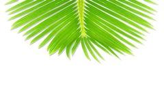 Groene de bladerentextuur van de palmkokospalm op witte achtergrond met de ruimte van het tekstexemplaar royalty-vrije stock foto