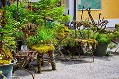 Groene de decoratieinstallaties en bloemen van Hallstattoostenrijk stock afbeelding