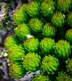 Groene de lente Stock Afbeeldingen
