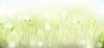 Groene de lente bokeh achtergrond met gras, hemel en onscherpe lichte D Stock Afbeeldingen