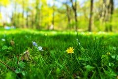 Groene de lente van de zomermünchen van het Grasgebied Stock Afbeelding