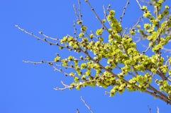 Groene de lentebladeren Stock Foto's