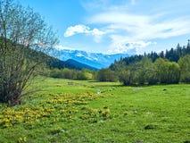 Groene de lenteweide in de bergen van Svaneti stock afbeelding