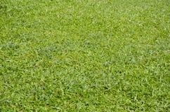 Groene de vloertextuur van het grasgras royalty-vrije stock afbeeldingen
