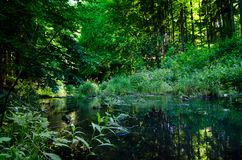 Groene de zomer bos en kalme rivier stock foto