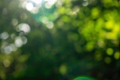 Groene de zomertuin Vage natuurlijke achtergrond met bokeheffect op een zonnige dag royalty-vrije stock foto