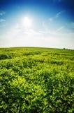 Groene de zomerweide op heldere zonnige dag Zonnig landschap met gr. Royalty-vrije Stock Fotografie