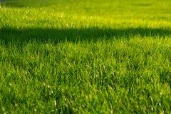 Groene decoratieve tuin Neutraal landschap met een groen gebied flowering boom stock afbeeldingen