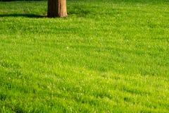Groene decoratieve tuin Neutraal landschap met een groen gebied flowering boom stock foto's