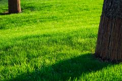 Groene decoratieve tuin Neutraal landschap met een groen gebied flowering boom royalty-vrije stock foto's