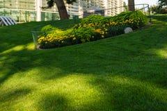 Groene decoratieve tuin Neutraal landschap met een groen gebied flowering boom royalty-vrije stock fotografie