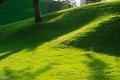 Groene decoratieve tuin Neutraal landschap met een groen gebied flowering boom royalty-vrije stock afbeelding