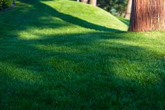 Groene decoratieve tuin Neutraal landschap met een groen gebied flowering boom royalty-vrije stock afbeeldingen