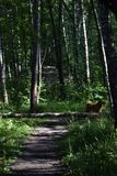 Groene deur in het Nationale Park van Losiny Ostrov stock afbeelding
