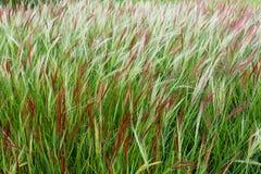 Groene Dichte Omhooggaand van het Padieveld stock foto