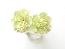 Groene die Anjerbloem op witte achtergrond wordt geïsoleerd Stock Foto's