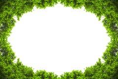 Groene die bladeren met copyspace worden geïsoleerd Stock Afbeelding