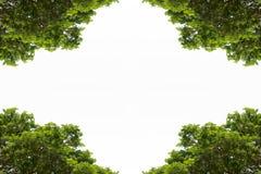 Groene die bladeren met copyspace worden geïsoleerd Stock Foto's