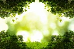Groene die bladeren met copyspace worden geïsoleerd Royalty-vrije Stock Foto's