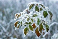 Groene die bladeren met rijp en ijs worden behandeld stock fotografie