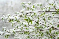 De sneeuw Lente Royalty-vrije Stock Foto's
