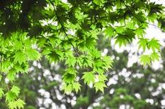 Groene die bladeren na de regen worden genomen stock foto