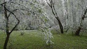 Groene die bladeren van de bomen en het gras met sneeuw worden behandeld nadat het weer verandert stock footage