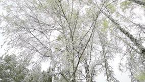 Groene die bladeren van de bomen en het gras met sneeuw worden behandeld nadat het weer verandert stock videobeelden