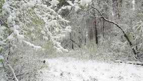 Groene die bladeren van de bomen en het gras met sneeuw worden behandeld nadat het weer verandert stock video
