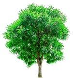 Groene die bomen op witte achtergrond worden geïsoleerd Royalty-vrije Stock Fotografie