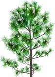 Groene die cederboom op wit wordt geïsoleerd Royalty-vrije Stock Foto