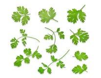 Groene die coriandrum sativum bladeren op witte achtergrond worden geïsoleerd stock afbeelding