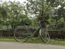 Groene die fiets naast een boom in de tuin wordt geparkeerd Stock Afbeeldingen