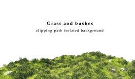 Groene die gras en struiken op witte achtergrond wordt geïsoleerd Stock Fotografie
