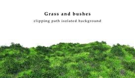 Groene die gras en struiken op witte achtergrond wordt geïsoleerd Stock Afbeelding