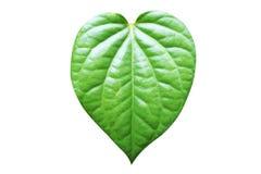 Groene die pijper betle op witte achtergrond, gevormd hart wordt geïsoleerd stock foto's