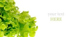 Groene die salade op een wit wordt geïsoleerd stock foto's