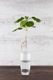 Groene die spruit in de lucht wordt opgeschort - duurzaam het leven concept Stock Afbeelding
