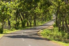 Groene die wegtunnel van bomen en installaties wordt gemaakt stock afbeelding
