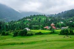 Groene die Weide door Deodar Tree in Himalayagebergte wordt omringd, Sainj-Vallei, Shahgarh, Himachal Pradesh, India stock foto's