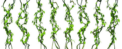 Groene die wilderniswijnstokken op witte achtergrond worden geïsoleerd Stock Foto's