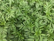 Groene dikke bladerenachtergrond Stock Foto's