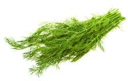 Groene dille op wit Stock Fotografie