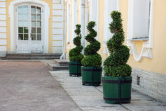 Groene drie Royalty-vrije Stock Foto
